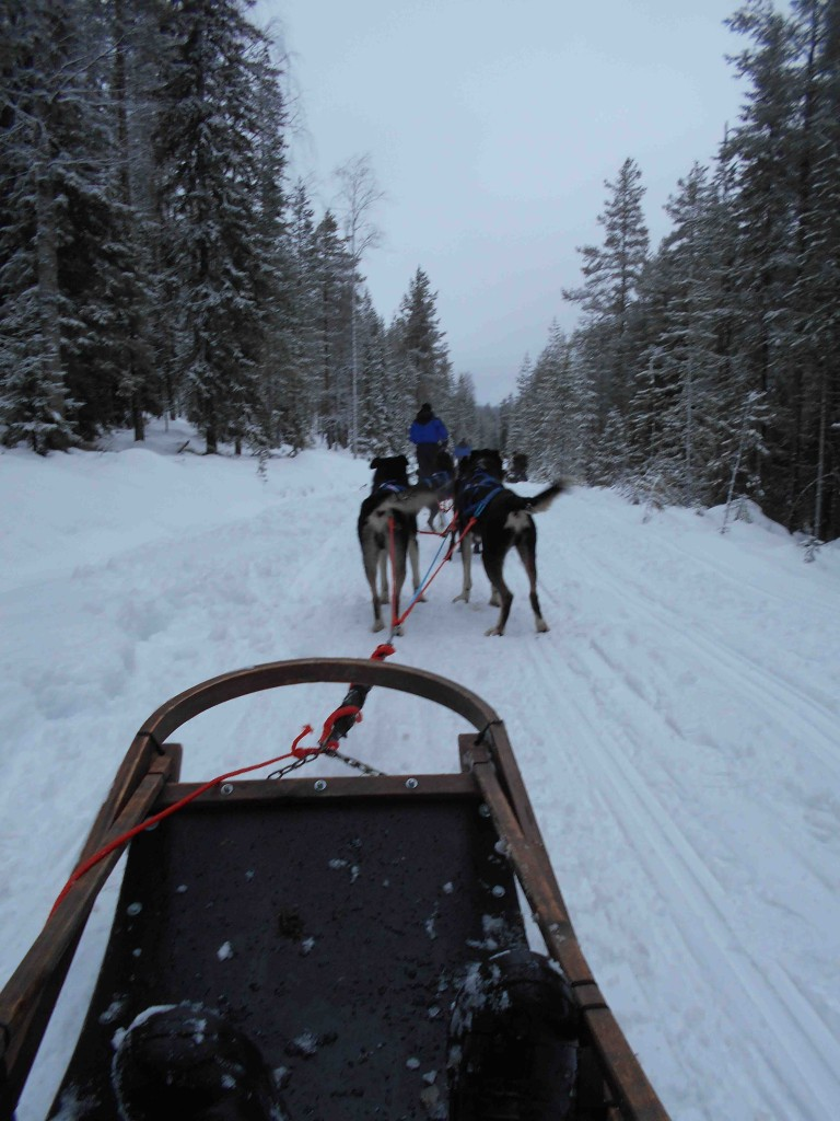 Dog sled ride near Arctic Circle