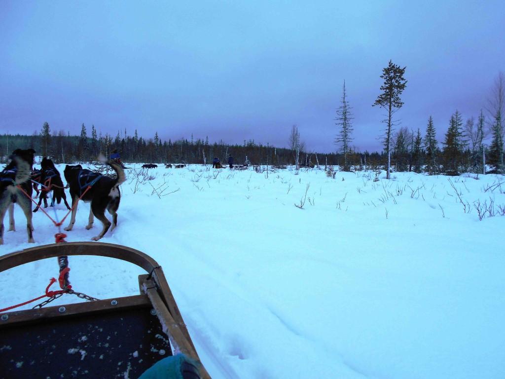 Dog Sledding Near Arctic Circle